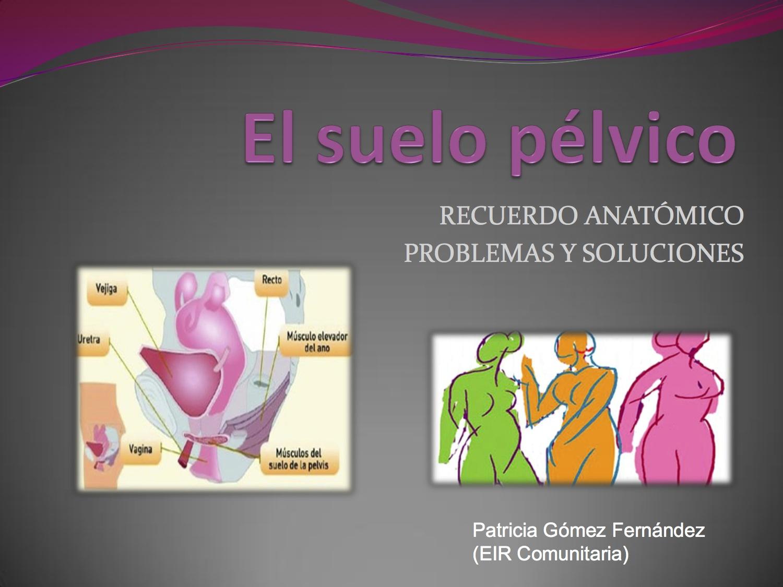 anatomia suelo pelvico power point